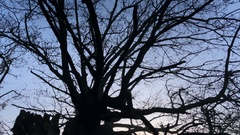 Tilt from sky at dusk in Norfolk countryside - United Kingdom Stock Footage