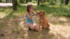 Lovely girl puts on sunglasses at dog's muzzle Stock Footage