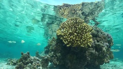 Coral partially reflected under the water surface Stock Footage