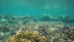 Healthy coral reef underwater Pacific ocean Stock Footage