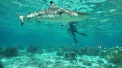 Man snorkeling looking at a blacktip reef shark Stock Footage