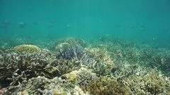 Natural sunlight on ocean floor with coral reef Stock Footage