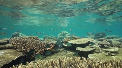 Shoal of fish between water surface and corals Stock Footage