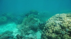 Underwater coral reef tropical fish New Caledonia Stock Footage