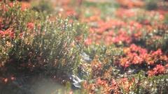 Shasta Macro Succulents Stock Footage