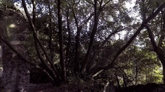 Tree with many branches and etruscan ruin Stock Footage