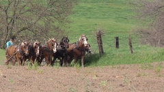 Draft horses pulling plow and preparing farm soil for Spring planting, Indiana Stock Footage