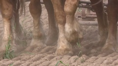 Close view of Draft horses pulling plow and tilling soil for planting, Indiana Stock Footage