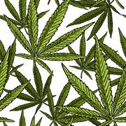 Seamless pattern with marijuana leaf. Vintage black vector engraving illust.. Stock Illustration
