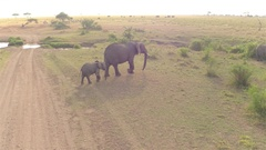 CLOSE UP: Mother and baby elephant crossing dusty road in safari game reserve Stock Footage