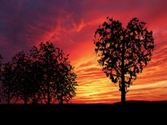 Heart shaped tree sways gently in the breeze at sunset Stock Footage