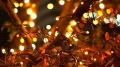 Close up tree with holiday light illumination in red, white and yellow colour Stock Footage