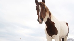 Front of the horse head on white background Stock Footage