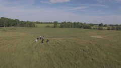 Holstein cows running under drone 4k Arkistovideo
