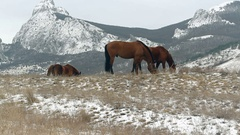 Grazing horse on mountain pasture in winter Stock Footage