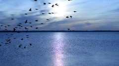Flock of birds fly on background of river landscape at dawn Stock Footage