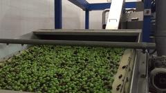 Olive Verdi | Washing Processing Stock Footage