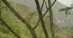 Close up: Tree in PERU: Lachay Hills in the region of Lima Stock Footage