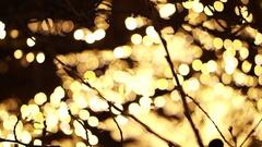 Christmas holiday Illumination lights on tree brach with blur bokeh background Stock Footage