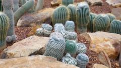 Cactus on arid area Stock Footage