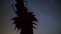 MoCo Astro Timelapse of Stars over Dragon Sculpture in Anza Borrego  Stock Footage