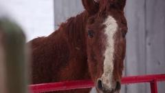 Horses Head Snow Stock Footage