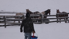 Horse Feeding in Snow Stock Footage
