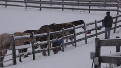 Horses being fed in Snow  Stock Footage
