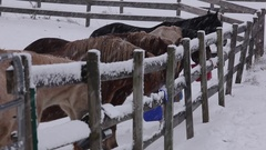Horses eating in Snow Stock Footage