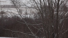 Snow Falling on Barren Tree Branches Stock Footage