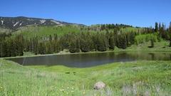 Lush Green Mountain Meadow Pond Colorado Stock Footage