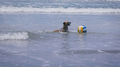 Funny dog playing with colored ball in the waves on the ocean. cute pets jumping Stock Footage