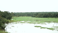 African swamp. Video taken from a ferry along the river. About African flora Stock Footage