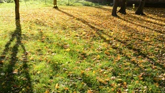 Flying  leaves in the wind in autumn park. Stock Footage