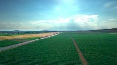 Vineyards grapevine plantation agricultural landscape blue sky aerial sunny Stock Footage
