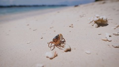 The island of Bali. Beach. Arthropods. Underwater and marine life in Bali is Stock Footage