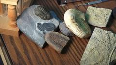 Paleontologist studying  prehistoric life forms trilobites tilt up Stock Footage