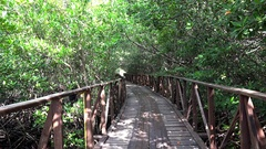 Wooden walking deck in mangroves of the Cayo Levisa Island. Cuba. Stock Footage