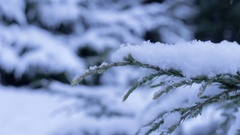 Juniper brunch with snow in winter Stock Footage