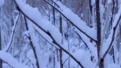 Twigs in winter Stock Footage