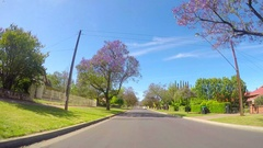 Jacaranda purple flowering tree lined streets of springtime Adelaide Stock Footage