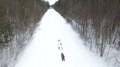 Dogsled team races through forest aerial 4k Stock Footage