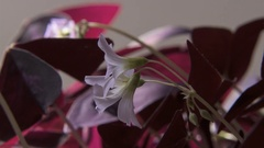 Time Lapse of Plant Leaves & Flowers Blooming  in the Flickering Sun in 4K Stock Footage