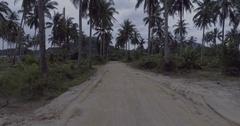 Palm tree gravel road Stock Footage