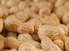 Close-up studio shot footage of peanuts Stock Footage