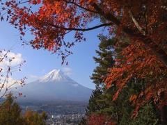 Peaceful view of Mount Fuji with Autumn leaves from Arakura Sengen shrine park Stock Footage