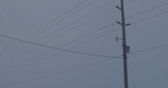 Motion shot looking up driving and passing hydro poles and power lines Stock Footage