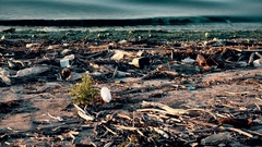 Environmental pollution with trash and plastic wastes on beach Stock Footage