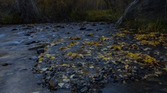 MoCo Timelapse of Fall Foliage by River at Dawn in Eastern Sierra -Long Crop- Stock Footage