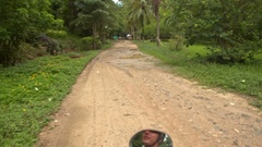 Camera Moves along Ground Road by Palms Tropical Trees Stock Footage